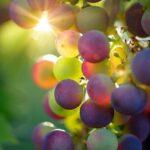 Vini Naturali Triple A di Agricoltori, Artigiani e Artisti