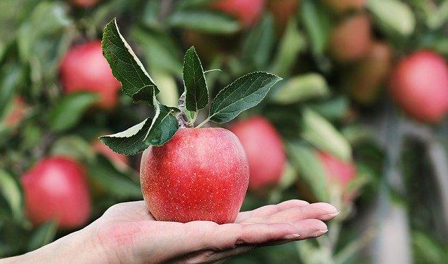 Annata positiva per la produzione di mele italiane
